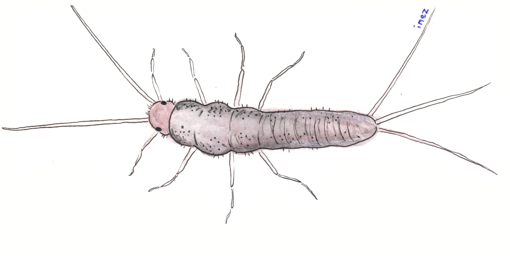 How to handle silverfish this summer –