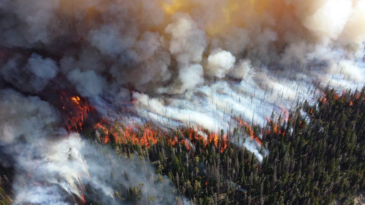 Fire in BC through forest